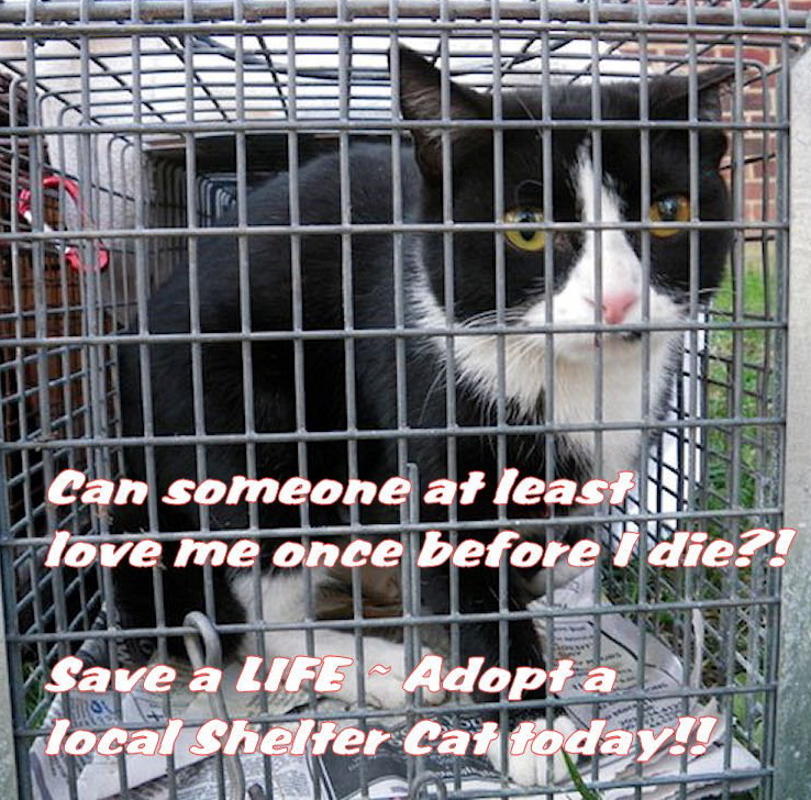 save an adult shelter cat please